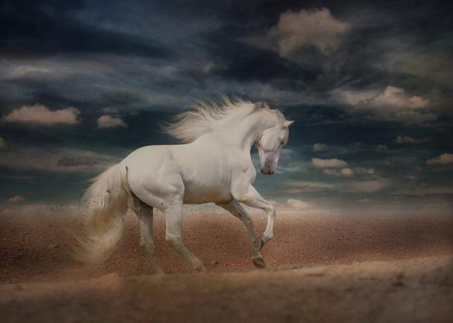white-horse-4031101_960_720